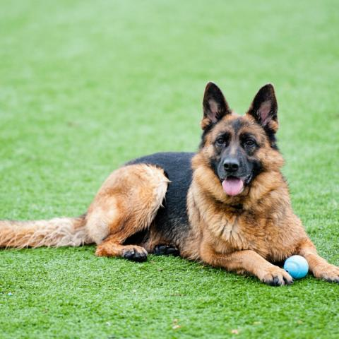 Artificial Grass - great for pets!