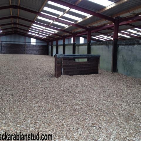 Equestrian Turnout Chip at Black Arabian Stud!