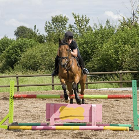 Equestrian Wood Fibre - the perfect horse riding surface